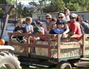 Hay Ride at the City Celebration Gymkhana